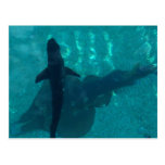 Shark and Stingray Postcard