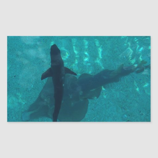 Shark and Stingray Rectangular Stickers