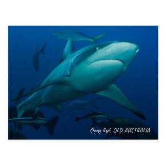 Shark at Osprey Reef Postcards
