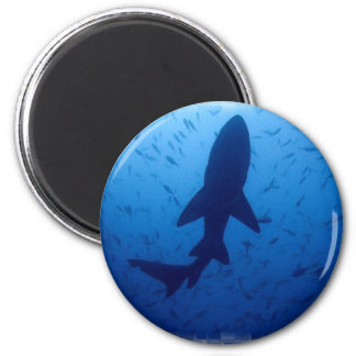 Shark Attack Magnet