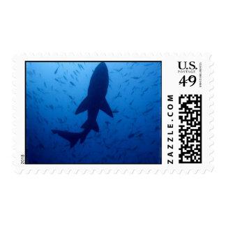 Shark Attack Postage Stamp