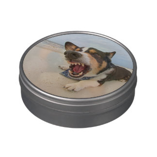 Shark Attack Simulation Jelly Belly Candy Tin