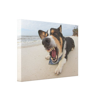 Shark Attack Simulation Gallery Wrap Canvas