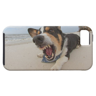Shark Attack Simulation iPhone SE/5/5s Case