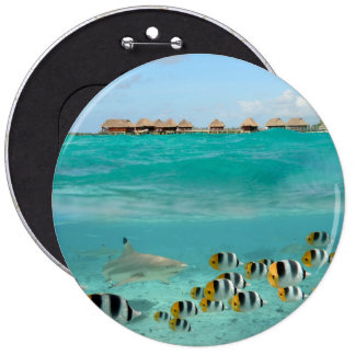 Shark chasing fishes, Bora Bora lagoon button