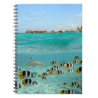 Shark chasing fishes in Bora Bora notebook