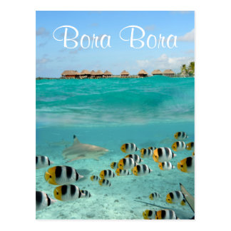 Shark chasing fishes in Bora Bora text postcard