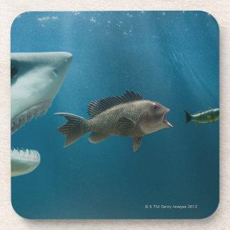 Shark chasing sea bass chasing juvenile beverage coaster