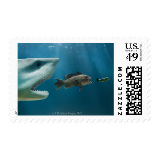 Shark chasing sea bass chasing juvenile postage