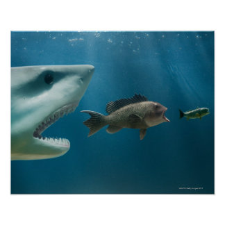 Shark chasing sea bass chasing juvenile poster