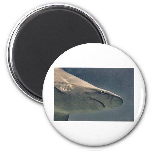 Shark Closeup Fridge Magnets
