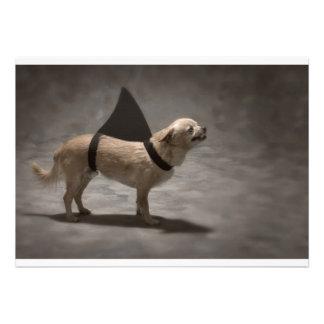 Shark Dog II Invitation