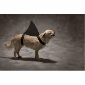 Shark Dog II Photo Sculpture