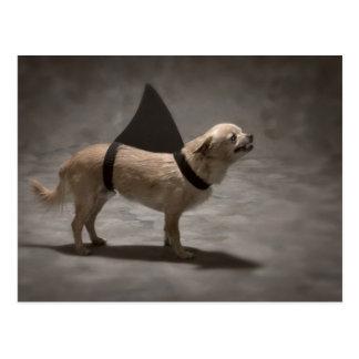 Shark Dog II Postcard