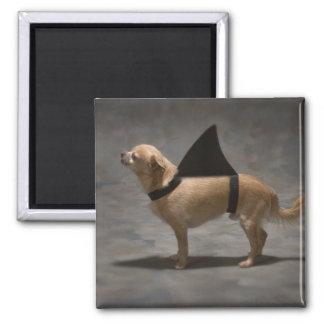 Shark Dog Magnet