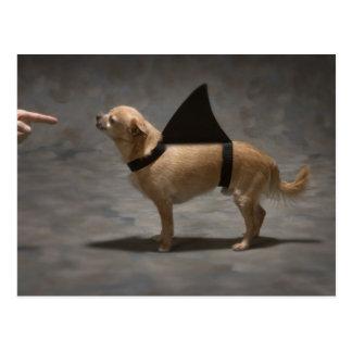 Shark Dog Postcard