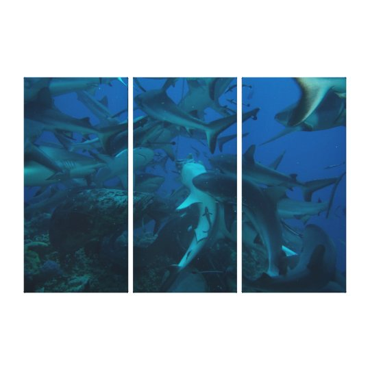 Shark Feed Great Barrier Reef Coral Sea Canvas Print
