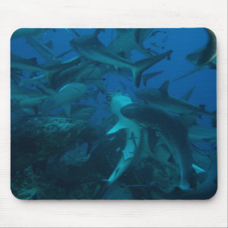 Shark Feed on the Great Barrier Reef Mouse Pad