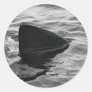 Shark Fin Classic Round Sticker