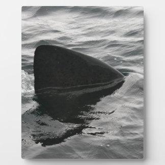 Shark Fin Photo Plaques