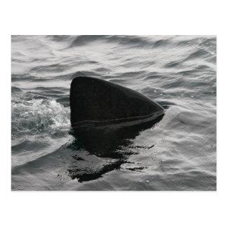 Shark Fin Postcard