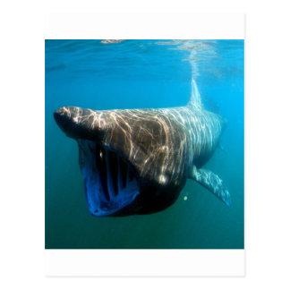 Shark Fish Ocean Tropical Ocean Destiny Gifts Postcard