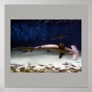 Shark Fish Swim Grey Gray Guy Gal Destiny'S Poster