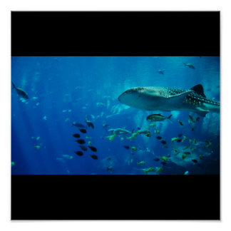 Shark Fish Water Splash Swim Fins Gray Guy Gal Poster