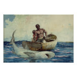 Shark Fishing, 1885 Posters