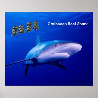 Shark image for poster
