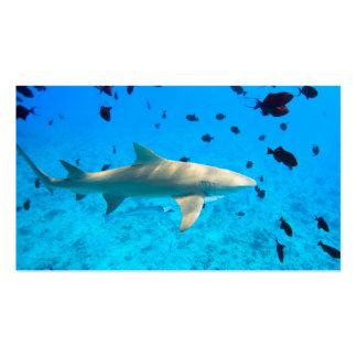 Shark in blue ocean water business card