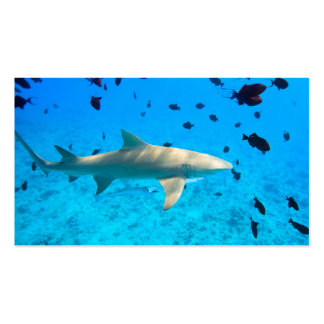 Shark in blue ocean water Double-Sided standard business cards (Pack of 100)
