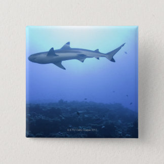 Shark in ocean, low angle view button