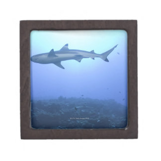 Shark in ocean, low angle view gift box