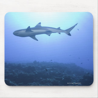 Shark in ocean, low angle view mouse pad