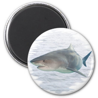 Shark in water 2 inch round magnet