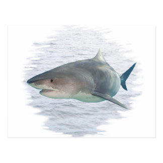Shark in water post cards