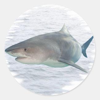 Shark in water sticker