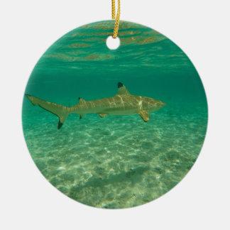 Shark in will bora will bora ceramic ornament