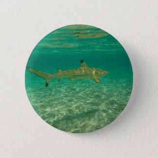 Shark in will bora will bora pinback button