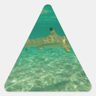 Shark in will bora will bora triangle sticker