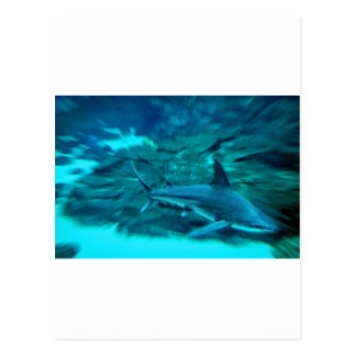 Shark on the hunt postcard