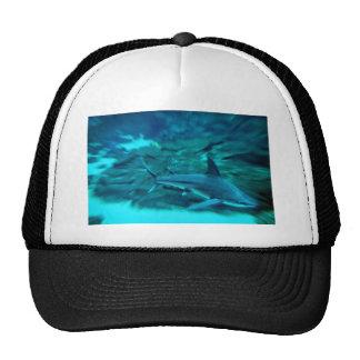 Shark on the hunt trucker hat