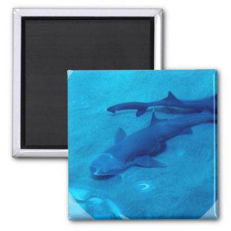 Shark Pair Magnet Fridge Magnet