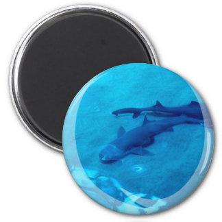 Shark Pair Magnet Magnet