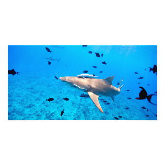 Shark Picture Card