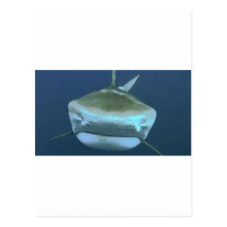 Shark pic postcard