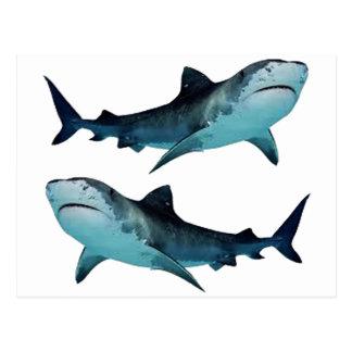 Shark Rally Postcard