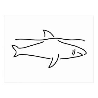 shark shark fish fin sea postcard