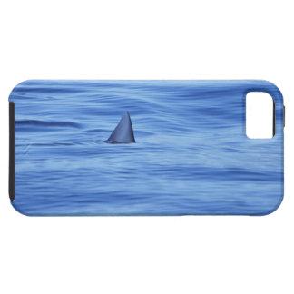 Shark swimming in ocean water iPhone SE/5/5s case